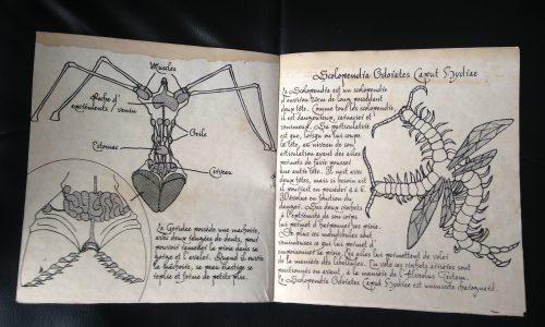 5Geridae&scolopendra